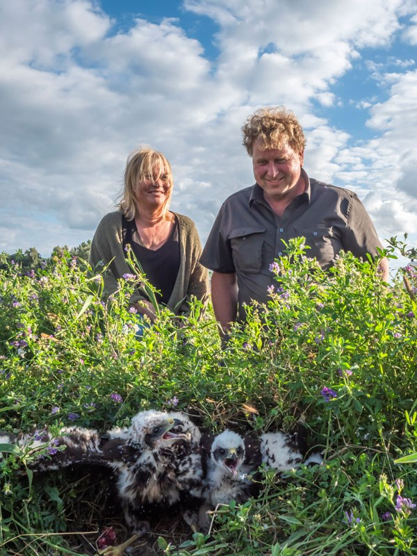 Nature-friendly farmers looking at Marsh harrier nest