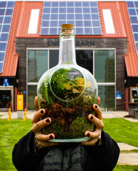 Person holding a glass jar with green plants n front of solar panels